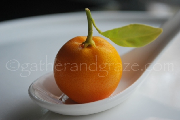 Perfect Cumquat | Gather and Graze