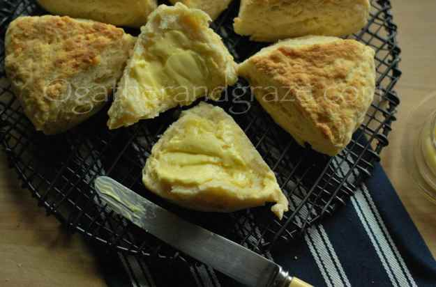 Savoury Cheese Scones | Gather and Graze