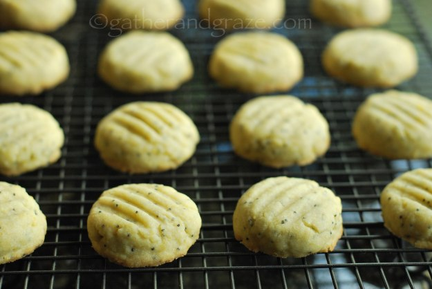 Lemon Poppyseed Biscuits/Cookies | Gather and Graze